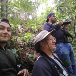 Birding in Andes with Manakin