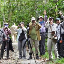 Birding in El Escondite - Southren Colombia VENT (3)Birding in El Escondite - Southren Colombia VENT