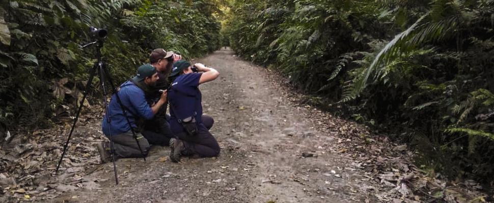 Birding in Otun Quimbaya - nature Colombia