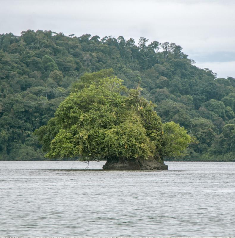Colombia Pacific Coast - Birding in Colombia