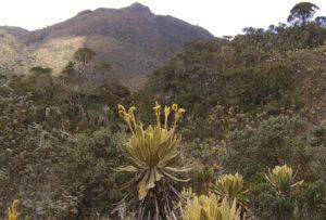 ANDEAN REGION COLOMBIA(2)