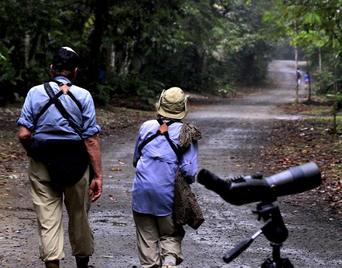 Birding in Rio Claro Reserve